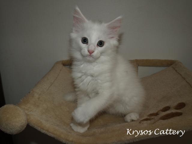 kitten1-2