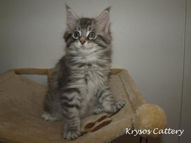 kitten2-1