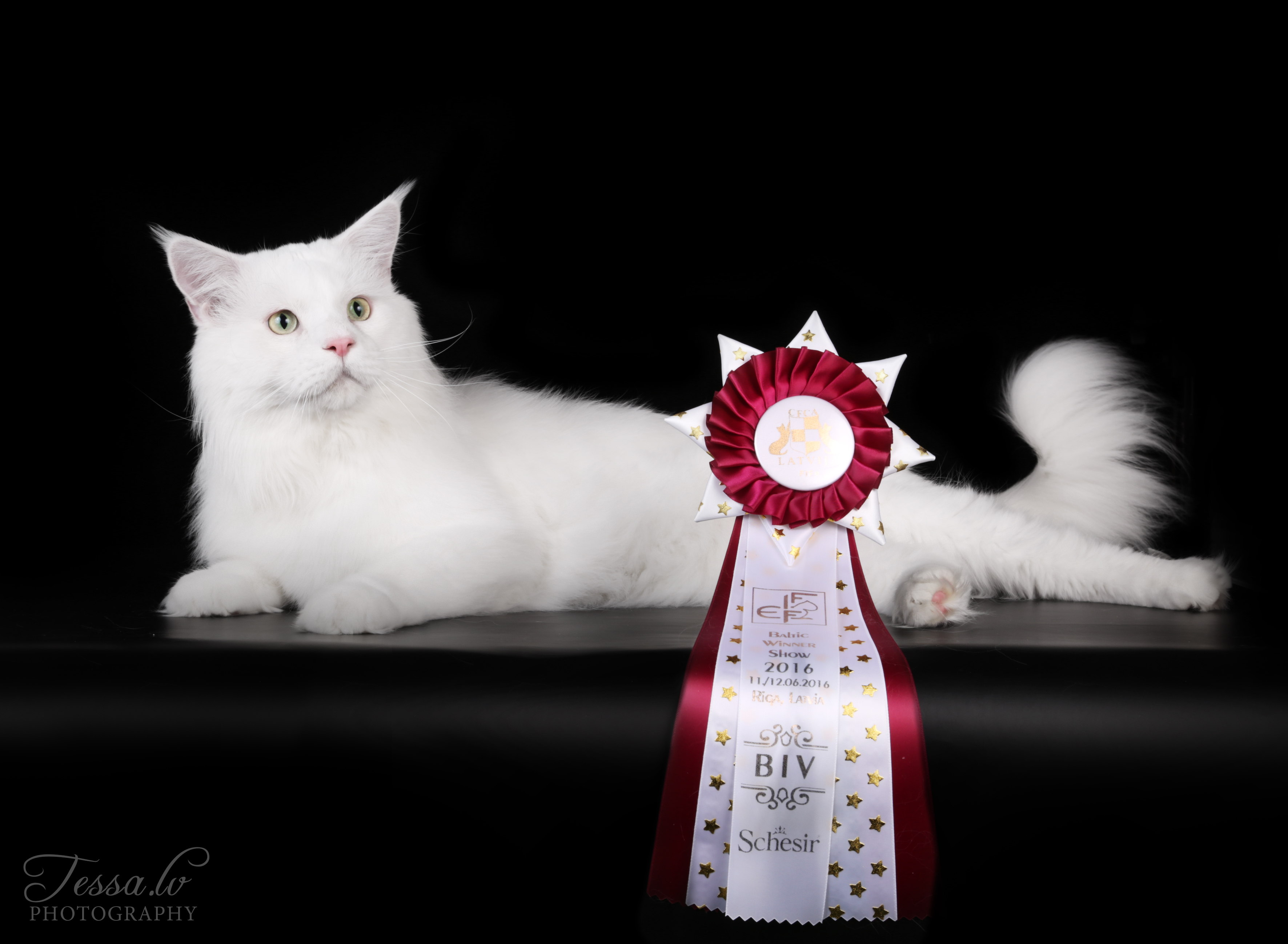 GIC*Krysos All my Life Baltic Winner Show 2016, EX1, CACS and BIV