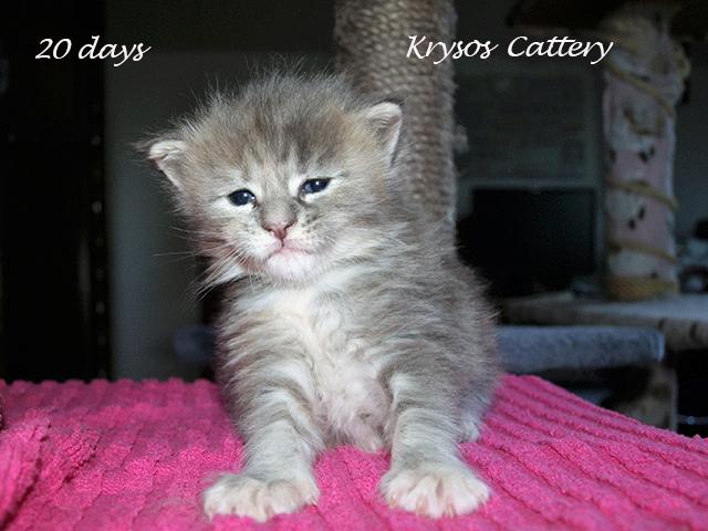 kitten3-1