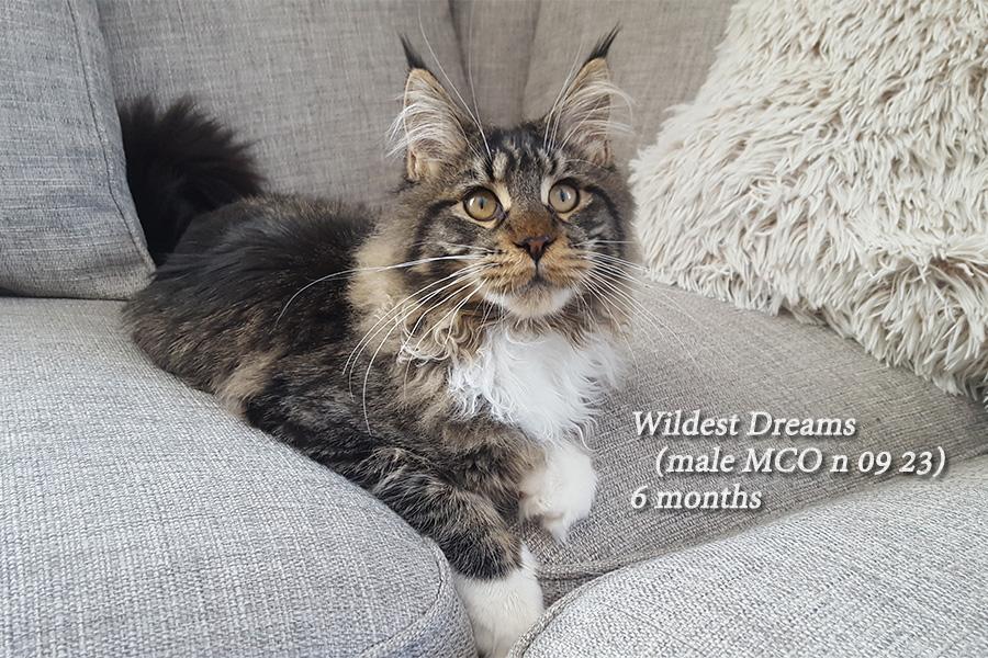 Krysos W-litter 6 months 16.3.2017
