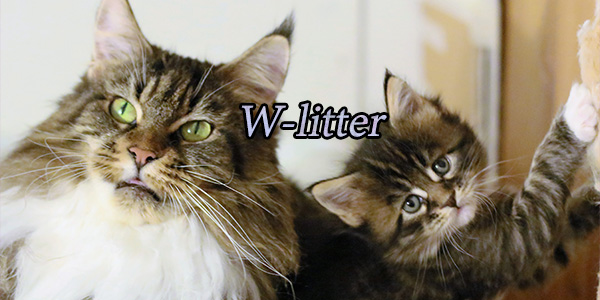 W-litter