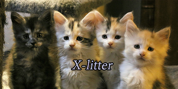 X-litter